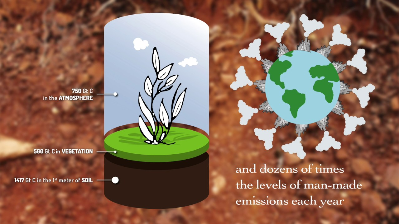 Soil Organic Carbon – the treasure beneath our feet