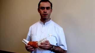 """Анонс лекции """"Современные возможности лечения заболеваний стопы и голеностопного сустава"""""""