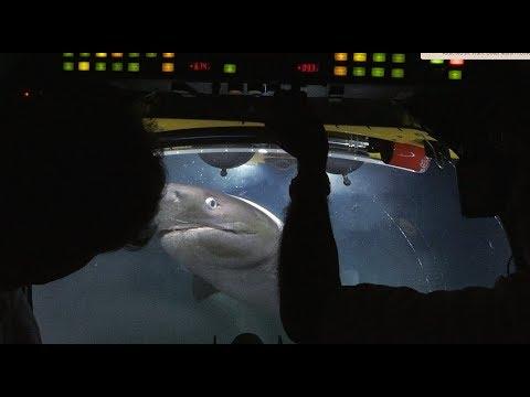 להקת כרישים תקפה צוות צילום;המים התמלאו בבשר ודם