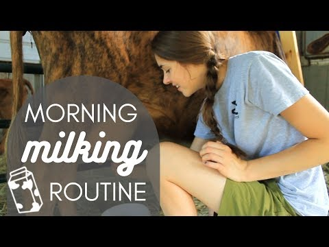 Video My Morning Milking Routine! download in MP3, 3GP, MP4, WEBM, AVI, FLV January 2017