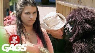 farse se pupa cu gorila