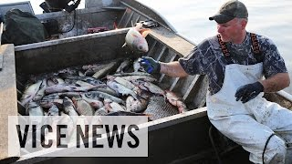 Video The Worst Fish in America: Asian Carpocalypse MP3, 3GP, MP4, WEBM, AVI, FLV Februari 2019