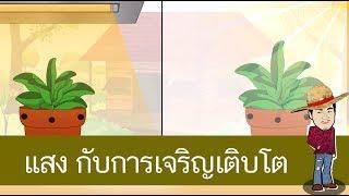สื่อการเรียนการสอน แสงมีผลต่อการเจริญเติบโตของพืช ป.4 ภาษาไทย