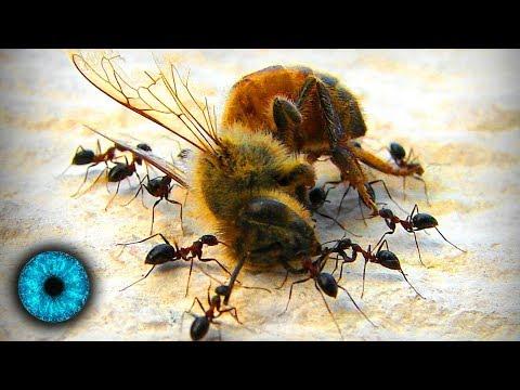 Das große Sterben der Insekten - Clixoom Science & Fiction