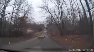 This happened on the way to work one day... I was only feet from hitting the deer.  Thank goodness I noticed in time.  Shot with my G1WH dashcam.  The embedded time and date are wrong, by the way.  This really took place on 1/26/2016 around 8:15am.Here's where you can buy one:http://www.gearbest.com/car-dvr/pp_16927.html?vip=101044