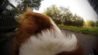 Dog Day out with a GoPro
