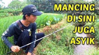Download Video Mancing di Selokan Tengah Sawah Gununglurah MP3 3GP MP4
