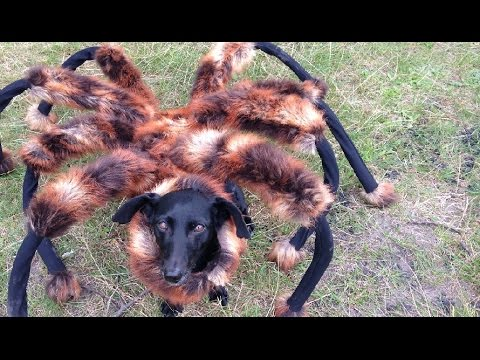 Giant mutant spider dog prank – Viral Video