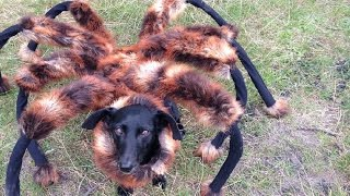 How to Scare People - Mutant Giant Spider Dog