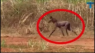 Top 10 Scary & Creepy Things Caught On Camera In The Woods - Unsolved Mysteries