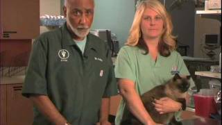 Important Tips For Administering Insulin And Caring For Your Diabetic Cat