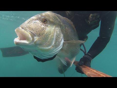pesca sub: denticione gigante!