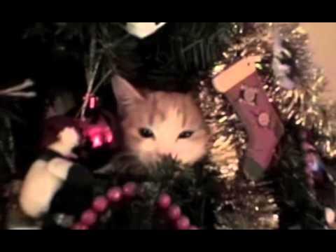 Mačke i novogodišnje jelke – SMEŠNI VIDEO KLIPOVI