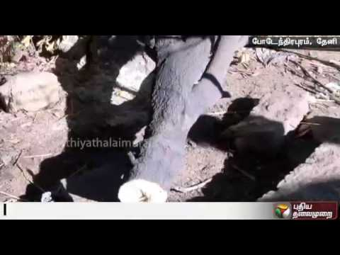 Two-arrested-in-Theni-for-cutting-sandalwood-trees