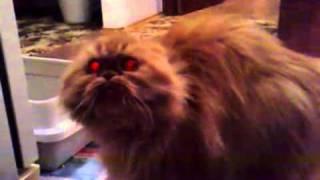 Демонический котик!
