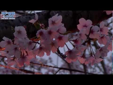 昼と夜 2つの表情 曲田山公園