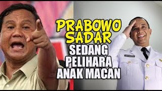 Video Hadapi Manuver Anies Prabowo Sadar Sedang Pelihara Anak Macan MP3, 3GP, MP4, WEBM, AVI, FLV Oktober 2017