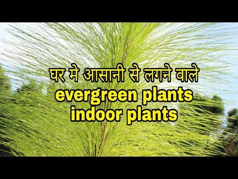Some easy growing Evergreen plants & Indoor plants of India ( Hindi Urdu) (видео)