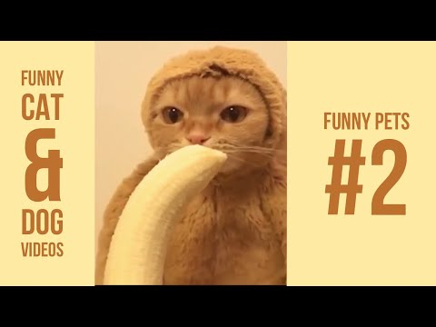 Funny cat videos - Funny Cat and Dog Videos #2  New 2018