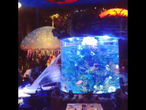 Check out what happened to the giant fish tank at the RainForest Cafe in Downtown Disney!