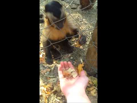 這個人被小猴子抓著手時還不知道牠要幹嘛…幾秒後,他完全不相信猴子會對他做這種事!