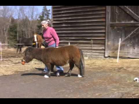 Ziggy Mini Horse Basketball Super Star 3 27 09