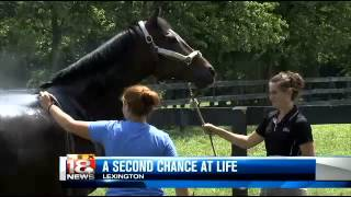 New Vocations Aims to Give New Life to Retired Racehorses