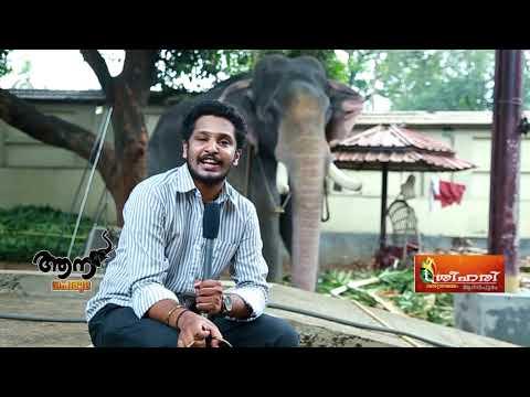 Video Thiruvambadi Sivasundar  ( Aana peruma  Episode -12 ) download in MP3, 3GP, MP4, WEBM, AVI, FLV January 2017