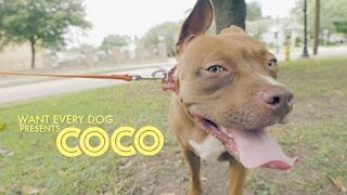 Calm Dog Productions creates masterful adoption video