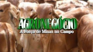 VÍDEO: Terceira matéria sobre agronegócio destaca importância de Minas na produção de leite e carne