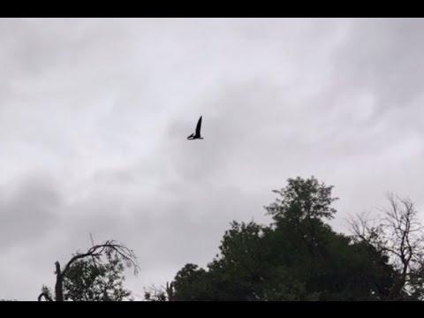 他發現有不明物體在天空飛翔時當場大喊「什麼?!」,看完他拍下的影片後我也傻眼了!