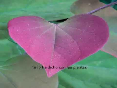 Luís Cernuda, poemas juveniles, Poesía juvenil, poemas cortos