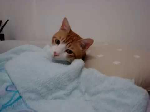 「[ネコ]猫が見せるベッドでの「すやすやタイム」が可愛すぎる。」のイメージ