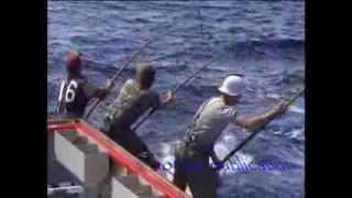 Video Tuna fishing 85 Port Lincoln 150 lbs plus fish biggest seen in my years fishing MP3, 3GP, MP4, WEBM, AVI, FLV Februari 2019