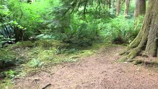 Nice quiet camping next to a river https://thedyrt.com/posts/111 This is Nehalem Falls Campground, site T3. It's one of six walk-in ...