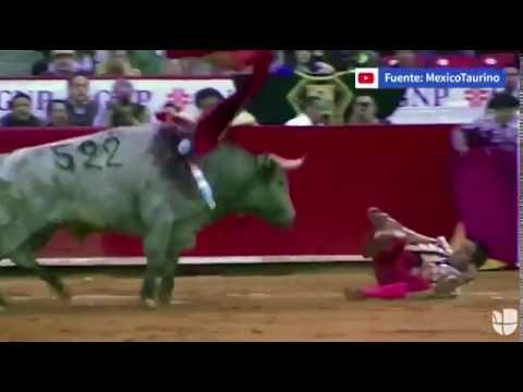 Bull attacks Bullfighter in bum, undergoes Anal reconstruction
