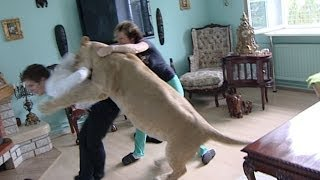 Video Lion attacks man at home MP3, 3GP, MP4, WEBM, AVI, FLV Juni 2017