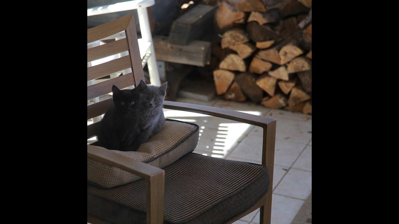 Žmurke – Dve male mace i mala kuca