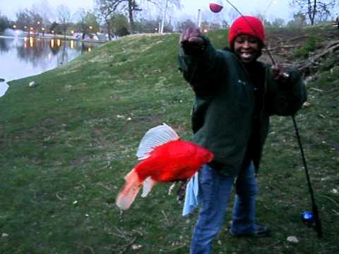 Epic Goldfish
