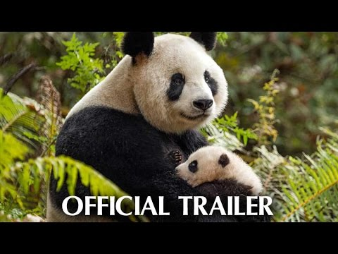 Disneynature s Born in China Official Trailer