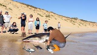 Video Amazing Man Help Dead Shark Give Birth To 3 Baby Shark On The Beach MP3, 3GP, MP4, WEBM, AVI, FLV Juli 2018