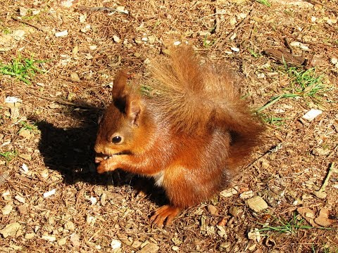 Snaizeholme Red Squirrel Trail in Widdale near Hawes round | yorkshire dales  Walks
