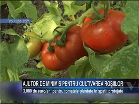 AJUTOR DE MINIMIS PENTRU CULTIVAREA TOMATELOR