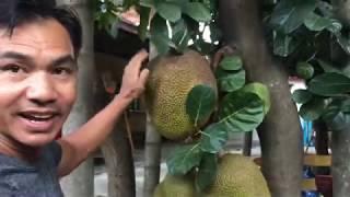 Khmer Travel - Cambodia fruit-ផ្លែឈើខ្មែរ, posted