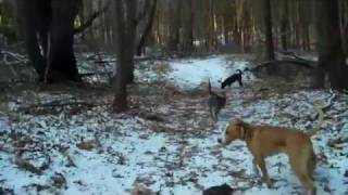 Walking In A Winter Wonderland with Doc Pawsitive&The PACK!