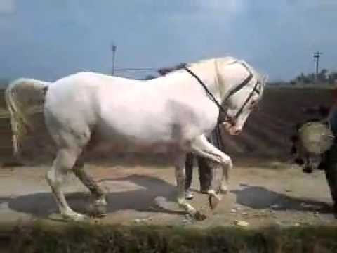Video horse dance download in MP3, 3GP, MP4, WEBM, AVI, FLV January 2017