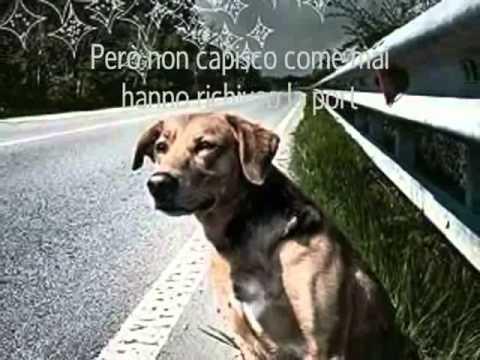 la sofferenza di un cane abbandonato
