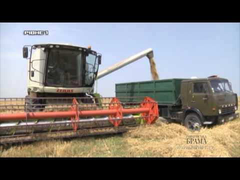 """Жнива на Рівненщині: Аби пожежа не """"з'їла"""" врожай [ВІДЕО]"""