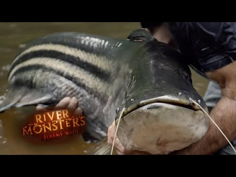 Finally Breaking The Tapah Curse | CATFISH | River Monsters