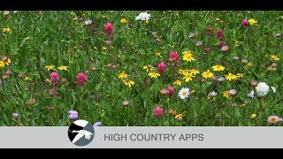 Flora of Yellowstone Region YouTube video